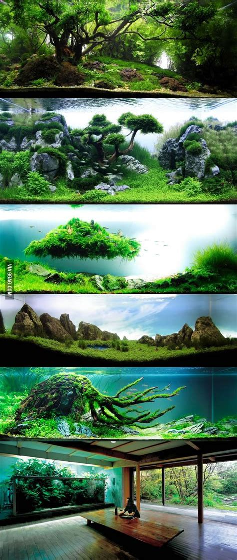 amano aquascape 25 best ideas about aquascaping on aquarium