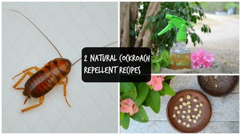 how to get rid of cockroaches in kitchen cabinets how to get rid of german roaches in my kitchen wow blog