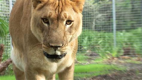 lions home home makeover