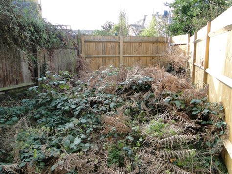 overgrown garden magickless november 2013