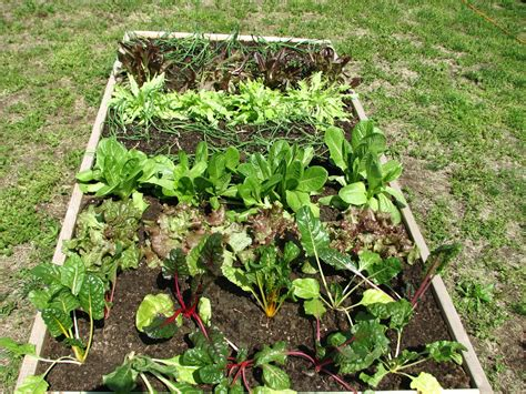 Beginner Guide For Vegetable Gardening Blog Nurserylive Vegetable Gardening Blogs