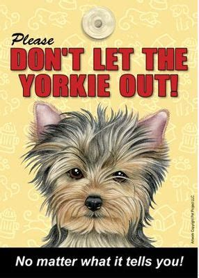 why do yorkies all the time 94 best yorkie quotes images on yorkies yorkie and terriers