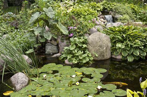 aquascape ecosystem designing your dream pond aquascape inc