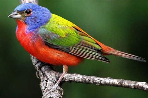 10 000 birds what do you get a bird lover who has