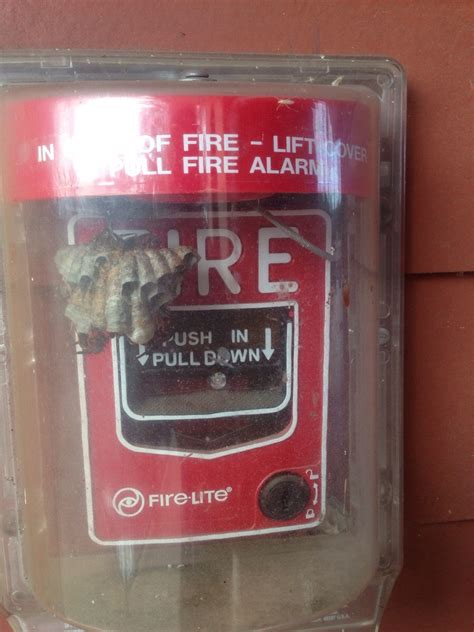 Spider Fire Alarm Meme - i guess we will all just burn funny