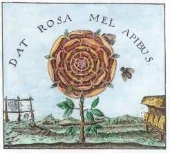 rosa mistica fiore rosa alchemica roses fan 233 es
