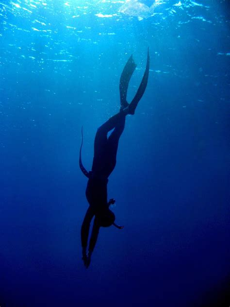 Freediving Open Water Course open water freediving course 20m gold coast the scuba coach reservations
