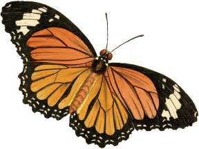 antique butterfly antique butterfly clipart clipart best