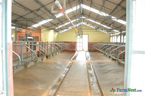 Dairy Cow Shed Design by Indian Cow Shed Design Studio Design Gallery Best