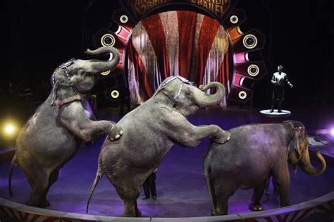 Circus Elephant Rage Senator Leach And Lieutenant Governor Stack Praise Circus Elephant Phase Out Wpmt Fox43