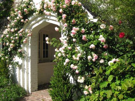 pierre de ronsard rose, eden rose, la rose pierre de ronsard