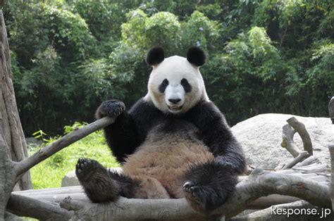 パンダ、成田空港到着---上野動物園へ | 車選び.com