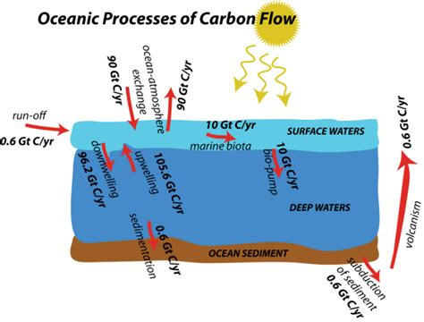 flow diagram of carbon cycle basic carbon cycle flow diagram choice image how to