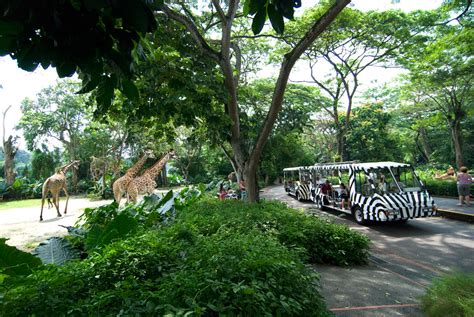 Zoological Garden by 5 Top Places To Visit In Singapore Travel Magazines