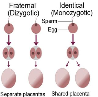 diagram of how identical are formed what do you by identical non identical and what