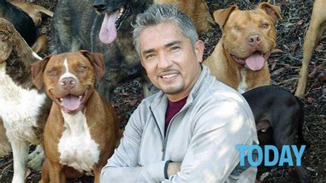 cesar millan dogs cesar millan maltratta gli animali il shock di striscia la notizia