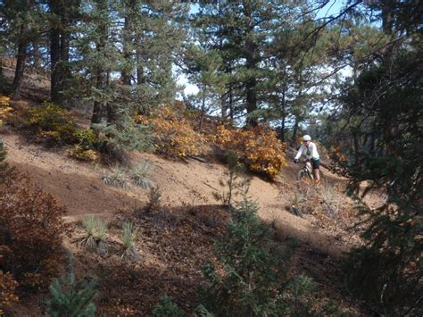 section 16 trail palmer trail section 16 photo singletracks com