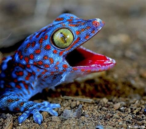 colorful lizard colorful lizard 60 images amazing colors