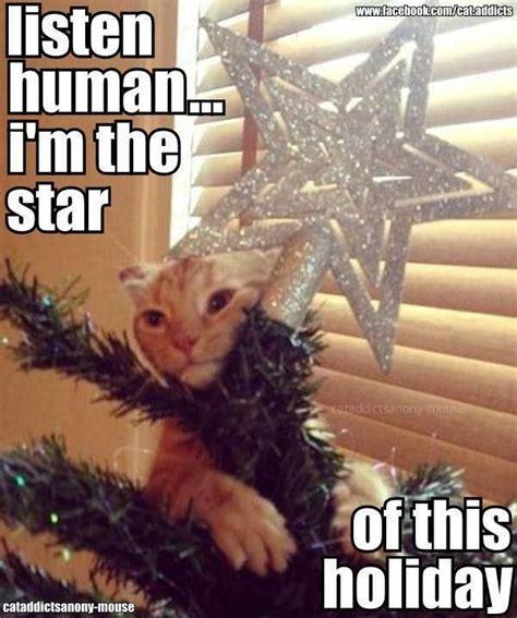 Christmas Animal Meme - 75 best happy holidays for animals images on pinterest