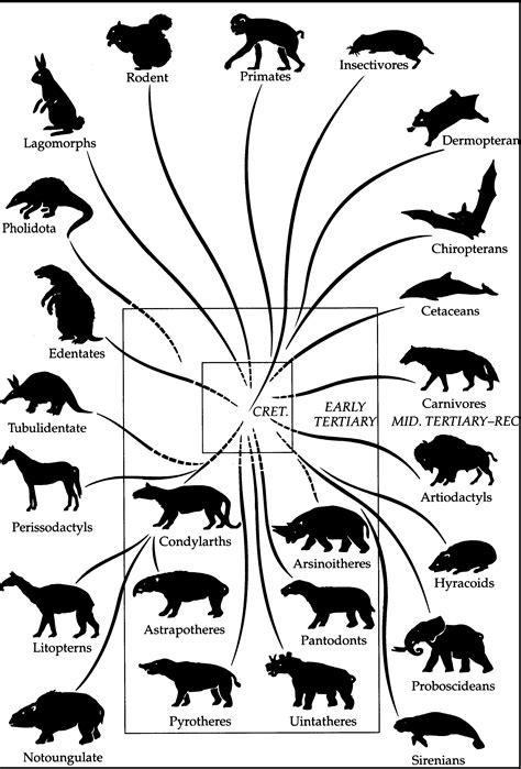 Árvore Evolutiva de Mamíferos - Origem em Revista