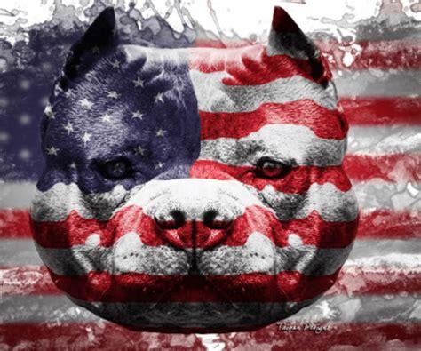 american wallpaper design american bully wallpapers wallpaper cave
