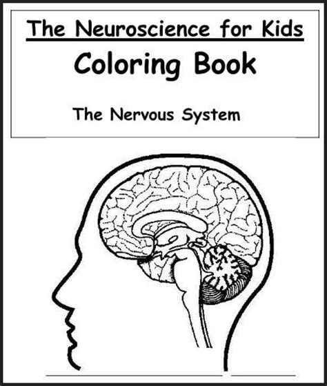 anatomy coloring pages nervous system a variety of materials for 3rd 12th grades club