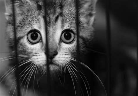 statistics on homeless animals homeless animals ~ harry hart