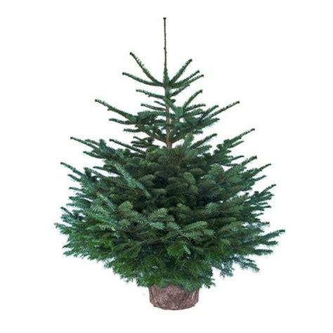 Planter Sapin Nordmann by Sapin De No 235 L Nordmann En Pot 100 Cm Livraison 224 Domicile