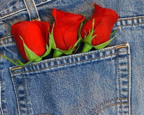blue jeans pocket roses wallpaper free downloads