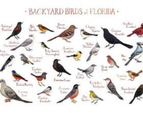 backyard bird identification chart related keywords