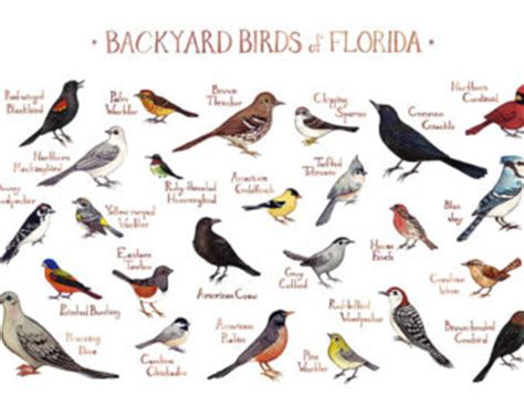 backyard birds of virginia birds of virginia chart pictures to pin on pinterest