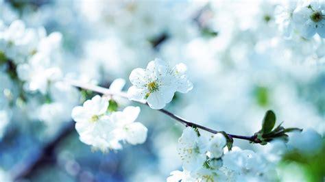 wallpaper bunga untuk laptop tips tips kesehatan untuk anda 30 wallpaper bunga paling