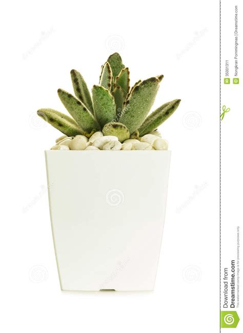 small tiny little cactus stock image image 35001311