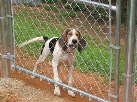 rete da giardino per cani recinti per cani fai da te recinzioni giardino recinto