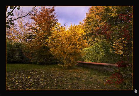 giardino autunno nel mio giardino e arrivato l autunno foto immagini