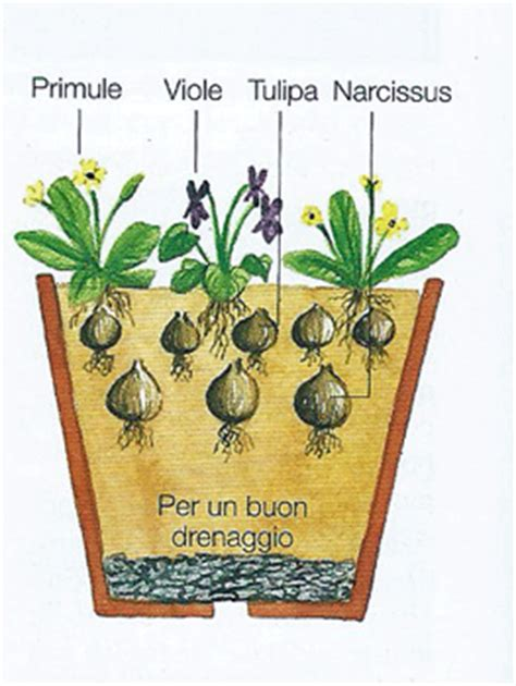 bulbi in vaso giardinaggio ponte in valtellina tulipani