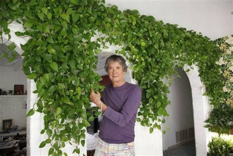 100 ideas to try about hydroponic farming gardens roof