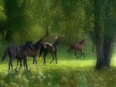 wallpaper horse free download free horse screensavers free download wallpapers running