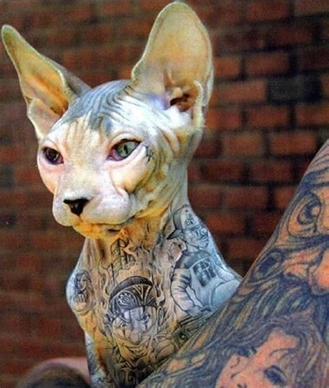 tattoo bald cat wonderfultattooed sphynx cats crazy pics
