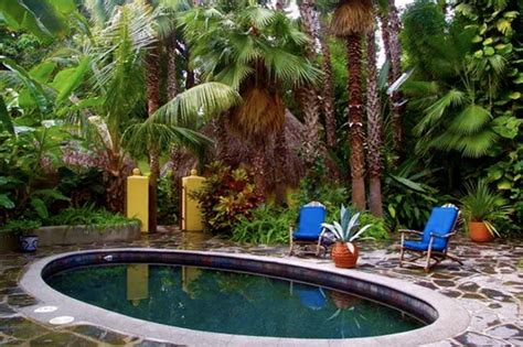 plants for pool area backyard ideas pinterest
