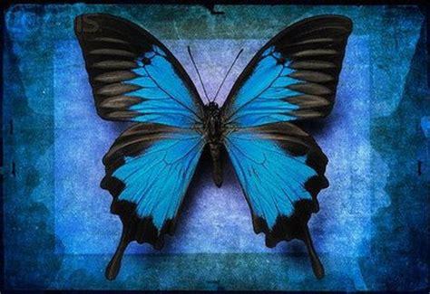 flores azules claras mariposa imagenes de archivo imagen 2050474 el blog de sibyla los sue 241 os son como mariposas azules