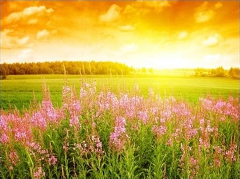 summer days and summer 40 inspiring summer wallpaper designs want the sun to shine creative cancreative can