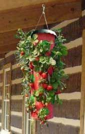 Topsy Turvy Strawberry Planter by Best 25 Strawberry Planters Ideas On