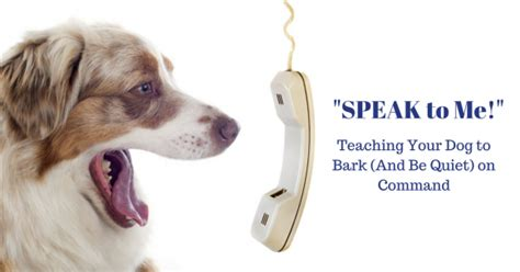 how to to bark on command speak to me teaching your to bark and be on command