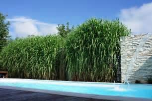 garten sichtschutzzaun sichtschutz grashecke f 252 r garten mit pool
