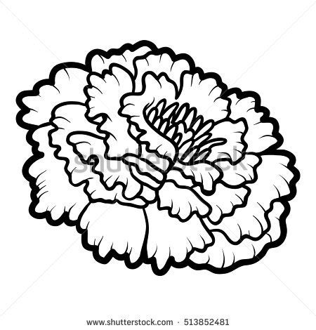 marigold stock images royalty free images amp vectors