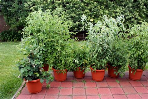 vegetables i can grow in pots and organic container gardening easy to grow