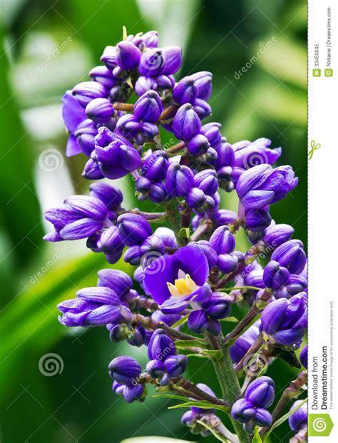 4 flores azules para jard planta azul de la flor jengibre foto de archivo libre