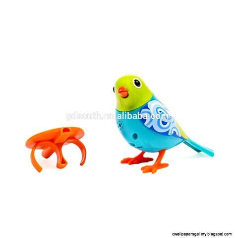 pet birds for kids wallpapers gallery