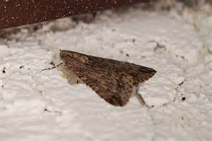 miraculous how to get rid of clothing moths way